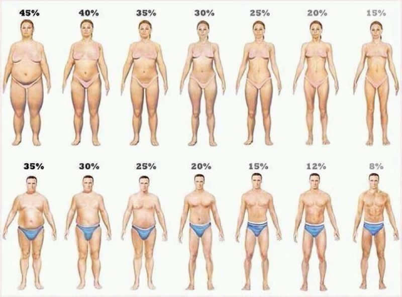 Men and Women Body Fat Shapes